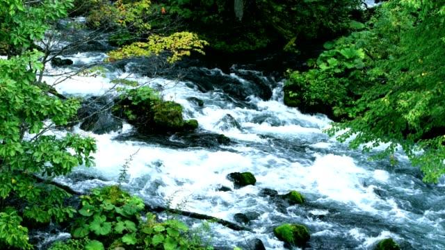 葉の色の阿寒国立公園 - 北海道点の映像素材/bロール