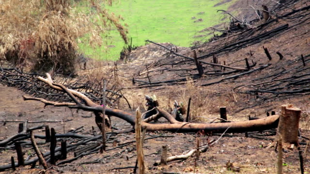 Akha Villagers Carry Back and Walking in Burnt Forest, Laos video