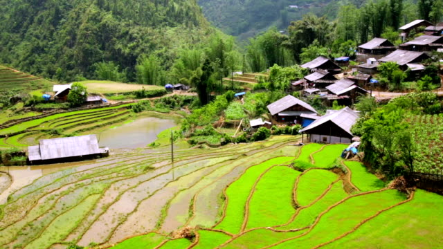 Akha villages in Sapa, Vietnam, Magnificent Rice Terrace Akha villages in Sapa, Vietnam, Magnificent Rice Terrace sa pa stock videos & royalty-free footage