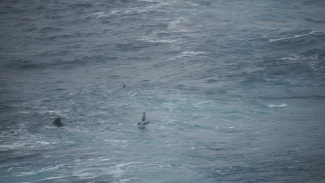 Albatross in Antarctica