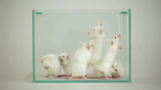 albino mouse nel terrario - mouse video stock e b–roll