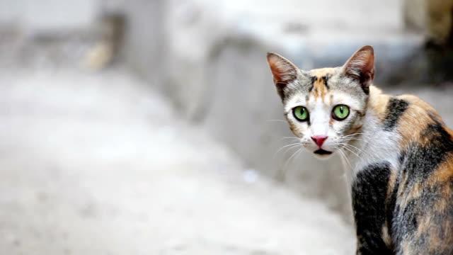 Alertness of cat video