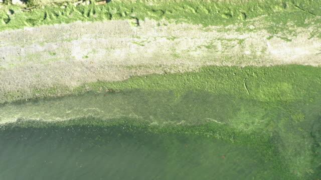 algae green beach aerial view overhead straight above drone angle - fertilizzante video stock e b–roll