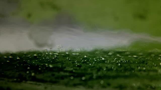 algen produzieren sauerstoffblasen - algen stock-videos und b-roll-filmmaterial