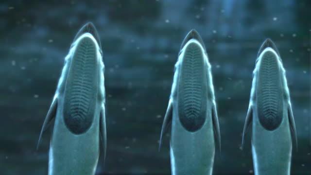 Aliens of the deep LOOP aka suckerfish  or remora. video