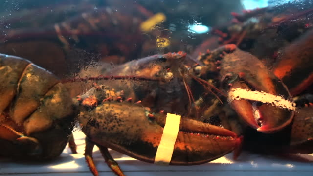Alive Canadian Lobster In Cold Saltwater Tank Alive Canadian Lobster In Cold Saltwater Tank storage tank stock videos & royalty-free footage