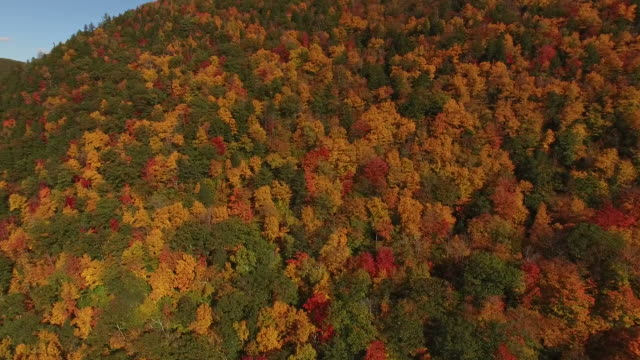 All The Colors of Fall From Drone video