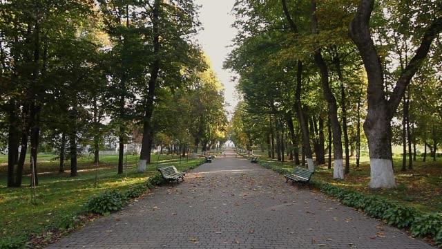 vidéos et rushes de allée du parc automne le matin - avenue