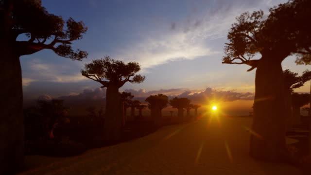 allee mit baobab-bäumen und vogel-silhouetten bei sonnenuntergang - affenbrotbaum stock-videos und b-roll-filmmaterial