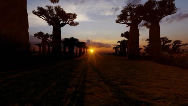 gränd med baobabträd och solnedgång - morondava bildbanksvideor och videomaterial från bakom kulisserna