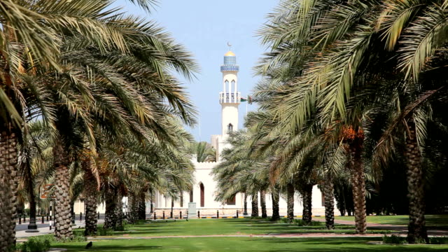 Alley with palm trees in Muscat video