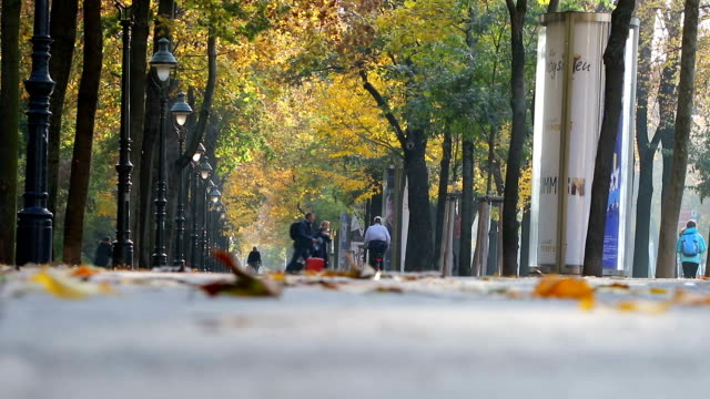 alley with people on the autumn park at sunny day, Vienna, Austria video