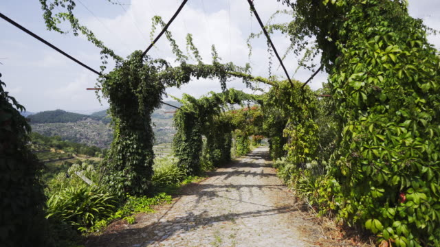 vídeos de stock e filmes b-roll de alley with vine plants between hills - douro