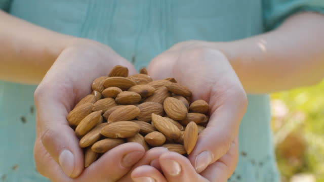 vídeos de stock e filmes b-roll de almond nuts in female hands - frutos secos
