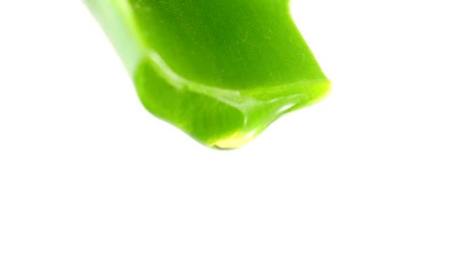 hoja de Aloe con gotas de jugo claro - vídeo
