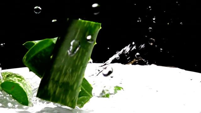 알로에 베라 고 물 스플래시, 슬로우 모션 - aloe vera 스톡 비디오 및 b-롤 화면