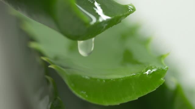 알로에 베라 주스 알로에 베라 잎에 떨어지는 컷 - aloe vera 스톡 비디오 및 b-롤 화면