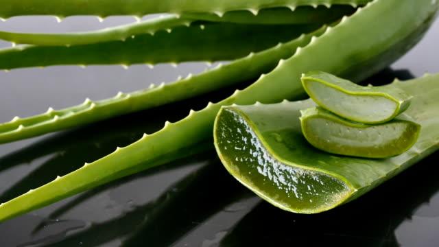 Aloe Vera leaves. Aloe Vera gel is very useful herbal medicine for skin care video