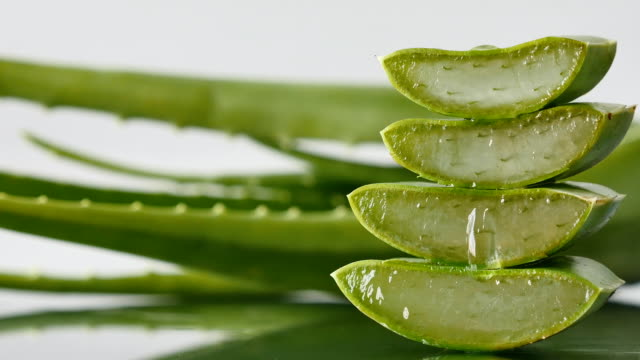 Aloe Vera leaves. Aloe Vera gel is very useful herbal medicine for skin care video