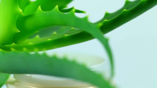 Aloe vera hojas y blanco crema - vídeo
