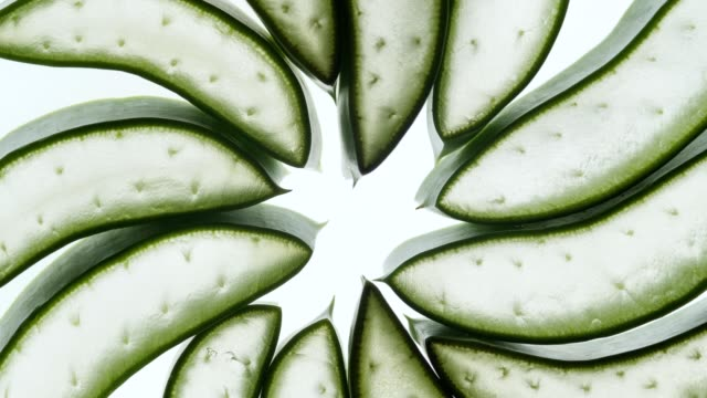 aloe vera slice on white background.natural herb concept.aloe vera gel for skin care. - aloe vera стоковые видео и кадры b-roll