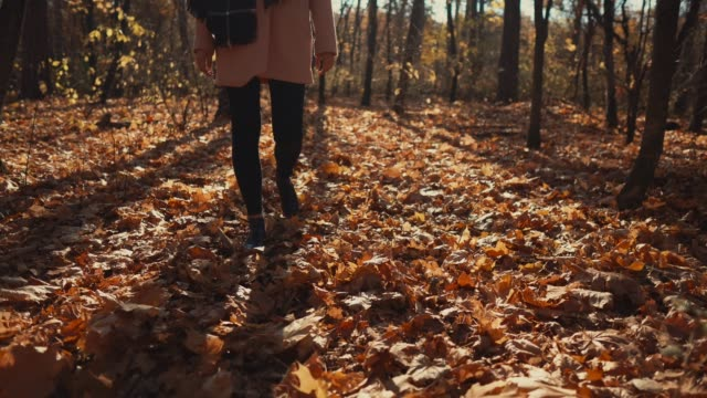 alone brunette woman is strolling in forest in sunny fall day - fare un passo video stock e b–roll