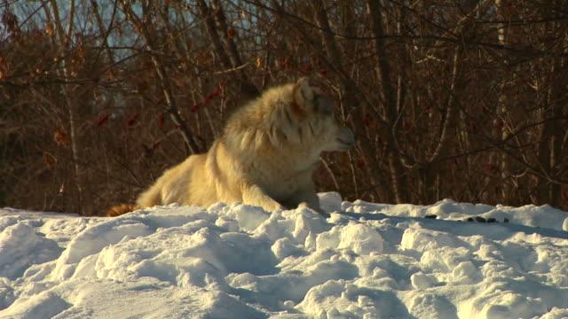 Alone in winter (wide shot) video