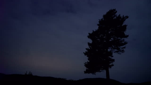 Alone Tree In Forest - 4K Resolution Forest, Night, Tree, Moonlight, Nature pine nut stock videos & royalty-free footage