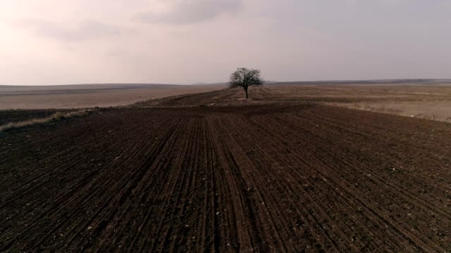 alone tree on field - morte video stock e b–roll