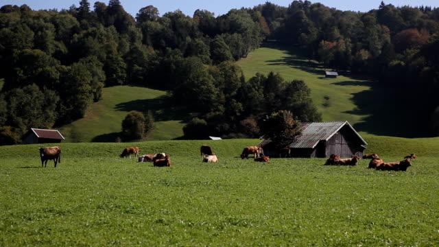 アルペンの生活 - 家畜点の映像素材/bロール