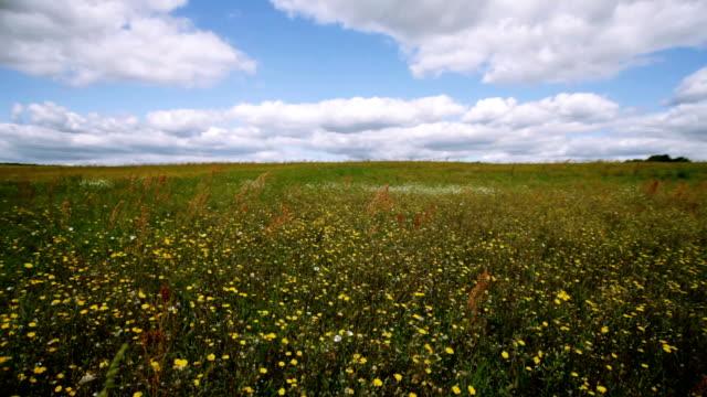 Alpine meadow. video
