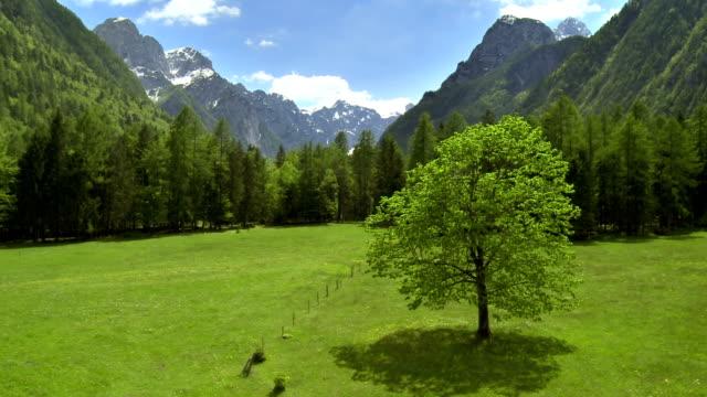 WS AERIAL Alpine Meadow video