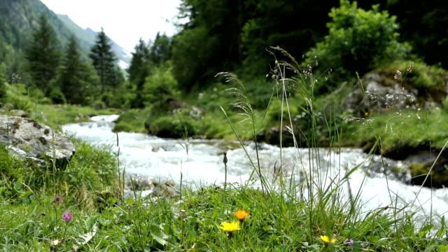 alpine mountain river flyter genom schwarzachtal valley i tyrolen österrike. - delstaten tyrolen bildbanksvideor och videomaterial från bakom kulisserna