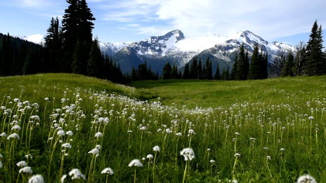 Alpine wild flowers flowing in the breeze video