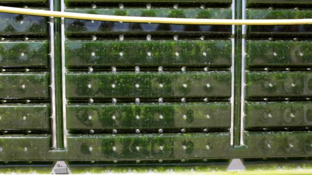 alternative energie: produktion von mikroalgen für regenerativen netzteil. - algen stock-videos und b-roll-filmmaterial
