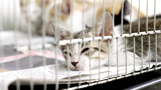 I am tired, will anyone come and rescue me. Young kitty cat sleeping in a metal cage outdoor. Looking at camera. Animal rescue concept. homeless shelter stock videos & royalty-free footage