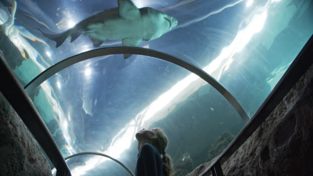 Amazed Little Girl in Tunnel Aquarium with Baby Shark Swimming Above Her Head Low-angled shot of a little girl amazed as he looks up the clear tunnel in an oceanarium, with a view of a baby shark swimming right past above her head. storage tank stock videos & royalty-free footage