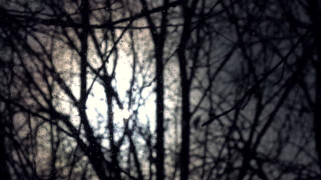 erstaunlich abstrakten hintergrund auf der rückseite leicht unscharf gestellt blattlosen wald und geheimnis schneesturm wie strom von böse insekt oder asche des großen feuers in zeitlupe. - schneeflocke sonnenaufgang stock-videos und b-roll-filmmaterial