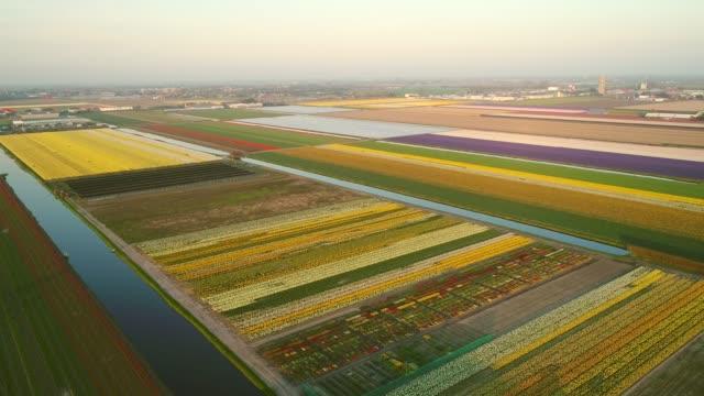 リッセ, オランダでのチューリップのカラフルな開花フィールドの素晴らしい空撮。 - キューケンホフ公園点の映像素材/bロール