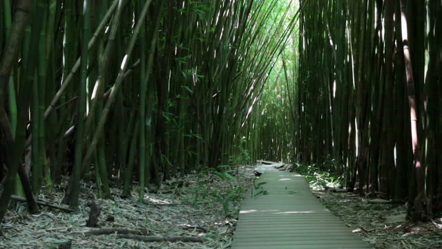 Amazing Bamboo Forest, Maui, Hawaii video