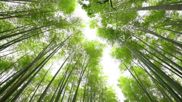 WS LA Amazing Bamboos in Japan video