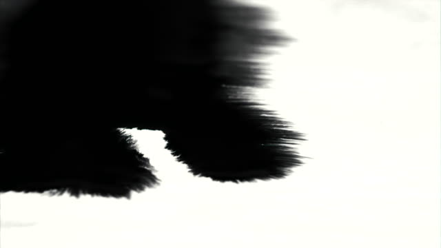 Amazing black ink spill running towards camera with pretty absorbing ink bleed video