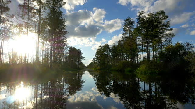 Amazing boat ride in swamp canal with tall mossy trees AERIAL: Amazing wetlands swamp canal with tall mossy trees in beautiful summer evening. Gorgeous reflection of cypress swamp tree canopies with beautiful spanish moss in calm glassy water surface wetland stock videos & royalty-free footage