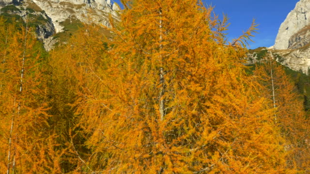 AERIAL: Amazing colors of autumn in the mountains video