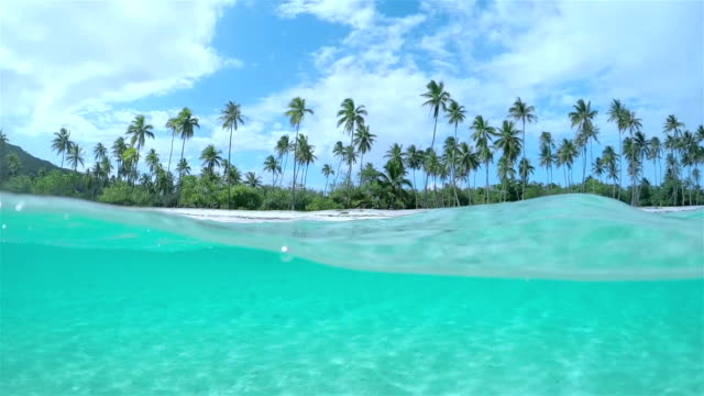 4K SLOW MOTION HALF UNDERWATER: Amazing crystal clear ocean lagoon in front of exotic white sandy beach with tall lush palm trees growing on tropical island in sunny summer