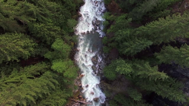 amazing overhead aerial of forest river flowing with white water rapids - antena filmów i materiałów b-roll