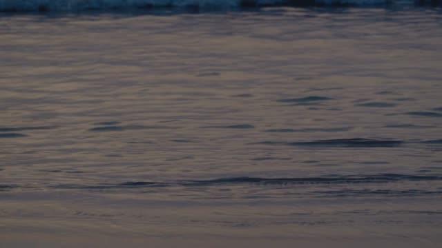 4k fantastisk solnedgång över den tropiska stranden. havet stranden vågor på strand, solnedgång, solljus reflektera över vattenytan. vacker kväll natur havet bakgrund. - solar panel bildbanksvideor och videomaterial från bakom kulisserna