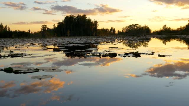 Amazing swamp wetlands at beautiful golden summer evening video