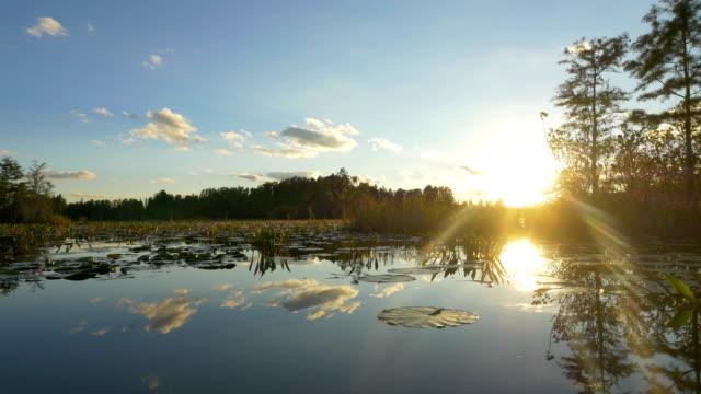 удивительный красивые золотые водно-болотный на лето - болото стоковые видео и кадры b-roll