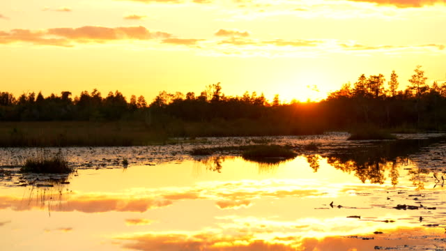 Amazing swamp wetlands at beautiful golden summer video